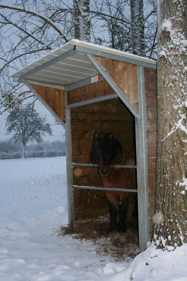 Le  calvados sous la neige... les chevaux s'éclatent! IMG_5055