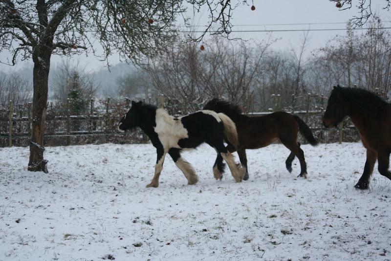 Le  calvados sous la neige... les chevaux s'éclatent! IMG_4960