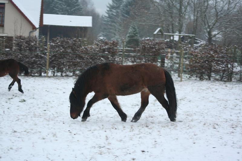 Le  calvados sous la neige... les chevaux s'éclatent! IMG_4962
