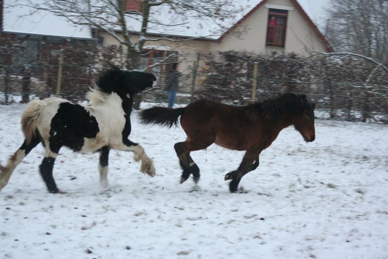 Le  calvados sous la neige... les chevaux s'éclatent! IMG_4969