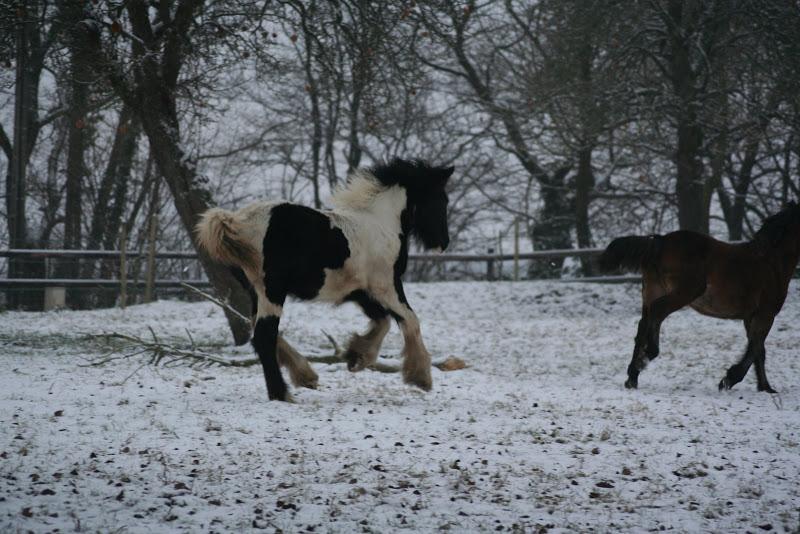 Le  calvados sous la neige... les chevaux s'éclatent! IMG_4947
