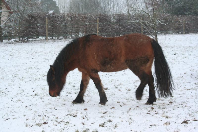 Le  calvados sous la neige... les chevaux s'éclatent! IMG_4926