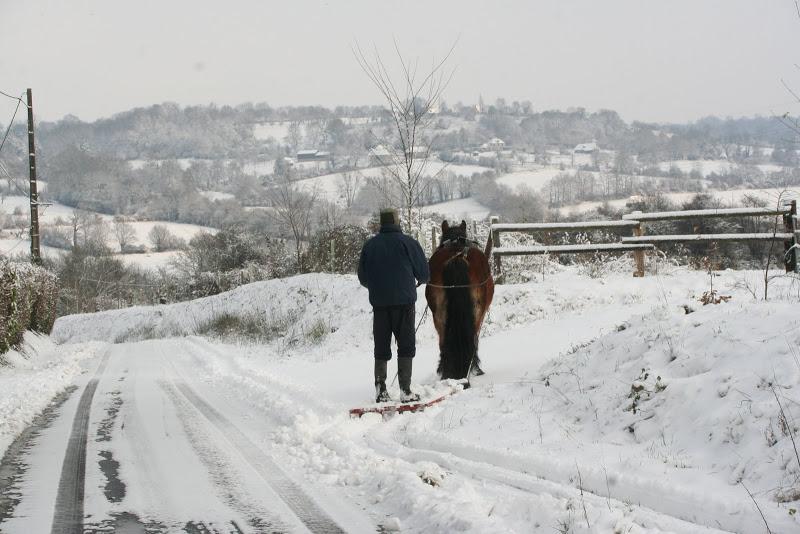 Le  calvados sous la neige... les chevaux s'éclatent! IMG_5132