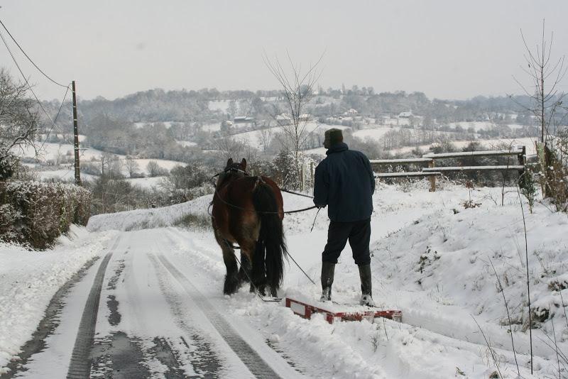Le  calvados sous la neige... les chevaux s'éclatent! IMG_5128