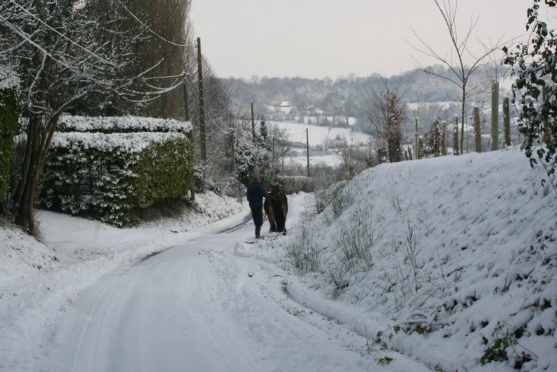 Le  calvados sous la neige... les chevaux s'éclatent! IMG_5117