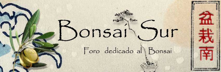 "Diseño del logo ""bonsaisur"" Bonsaisur4"