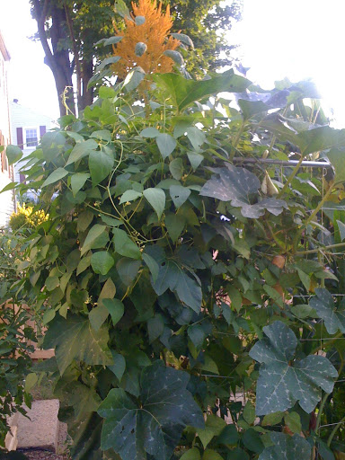 Trellis on more than one side Photo%203-787610