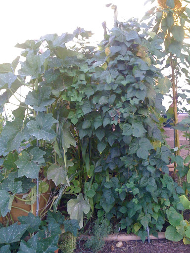 Trellis on more than one side Photo%202-714206