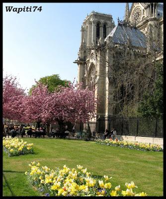 Une semaine printannière à Paris 40.Notre-Dame