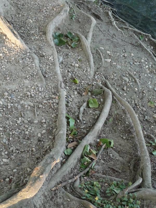 Rails dans le paysage... 2009_06_23__09_Rails_Racines_P1040861