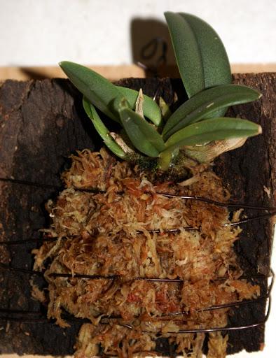 Petites folies d'Orchidays PICT1168