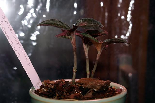 Petites folies d'Orchidays PICT1176
