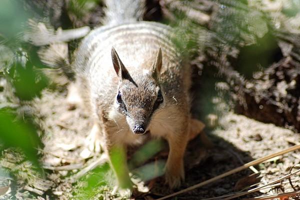 Animal de ptit loulou - 7 décembre trouvé par Lolo - Page 2 Fc31dc0d