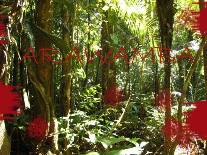 Arawamba Chumballs_foret_01cut_copie