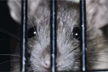 L'évasion d'Al Ratraz Rat3