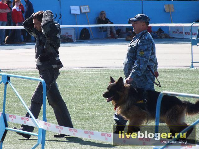 7- 8 сентября  фестиваль собак всех пород в г.Новосибирск Festival-vseh-porod-2013-121