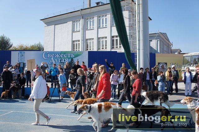 7- 8 сентября  фестиваль собак всех пород в г.Новосибирск Festival-vseh-porod-2013-35