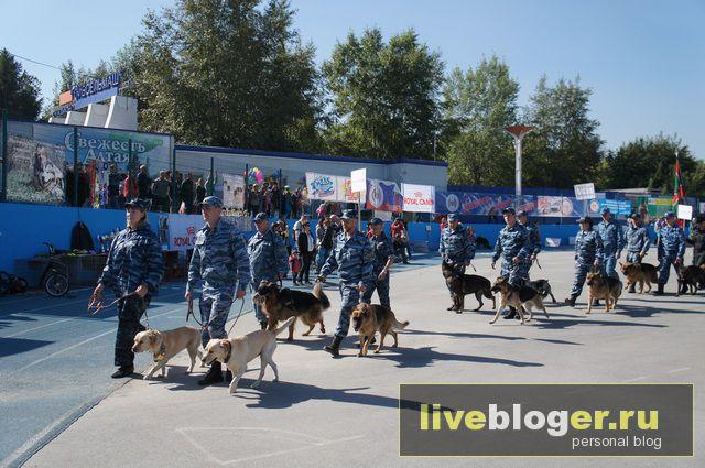7- 8 сентября  фестиваль собак всех пород в г.Новосибирск Festival-vseh-porod-2013-37