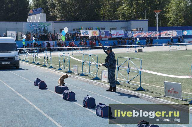 7- 8 сентября  фестиваль собак всех пород в г.Новосибирск Festival-vseh-porod-2013-76