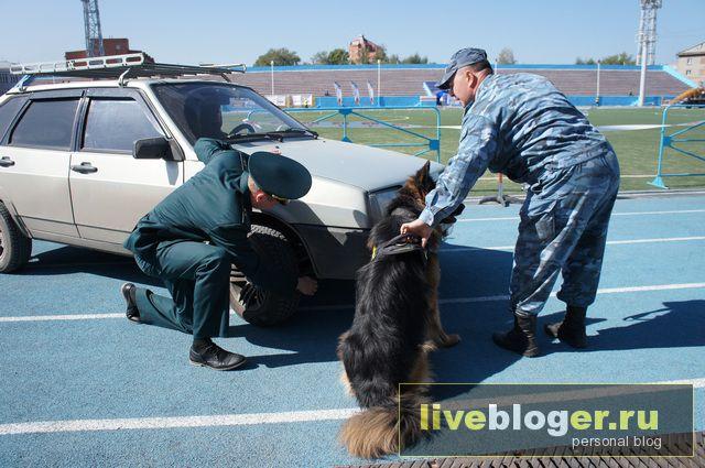 7- 8 сентября  фестиваль собак всех пород в г.Новосибирск Festival-vseh-porod-2013-78