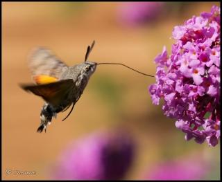Août 2011 2011_08_15_012318_320_18