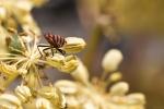 Macros/  proxi/  insectes  - Page 3 2018_09_17__150_47