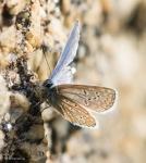 Macros/  proxi/  insectes  - Page 5 2018_09_30__150_48