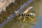 Macros/  proxi/  insectes  2018_09_6__150_84