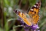 Macros/  proxi/  insectes  - Page 40 2019_07_05__150_91