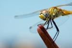 Macros/  proxi/  insectes  - Page 14 2019_09_19__150_62