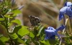Macros/  proxi/  insectes  - Page 14 2019_09_20__150_39