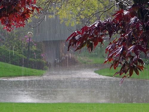 Kisa - Page 2 Rain_Beautiful