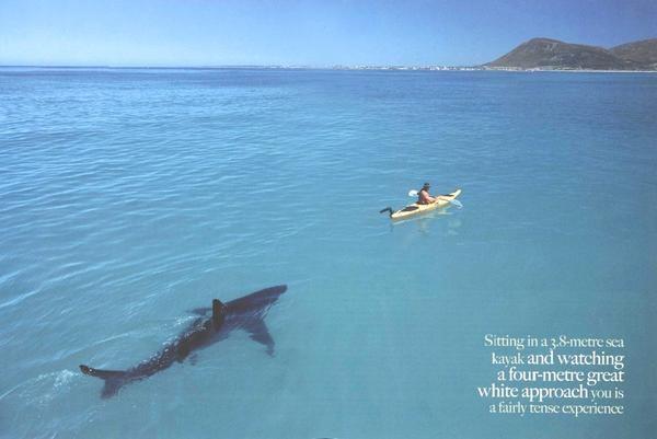 [Archive 36ème] Salon de détente  - Page 2 Requin