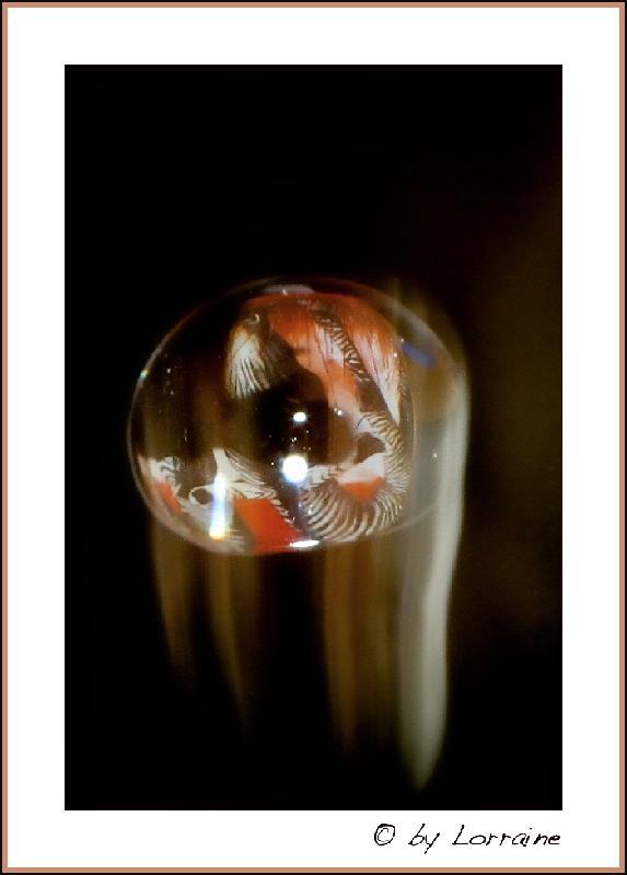 Versuche der Makrofotografie... - Seite 3 IMG_7234-07092012%20-%20Arbeitskopie%202
