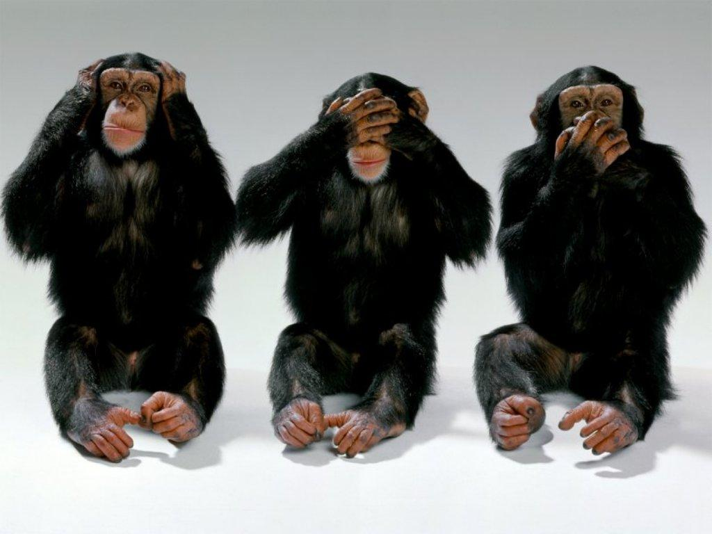 El juego de los animales Y LAS  FRUTAS Chimps