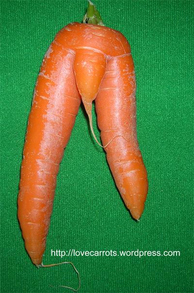 ne obično Ronnie_hoggan_carrot