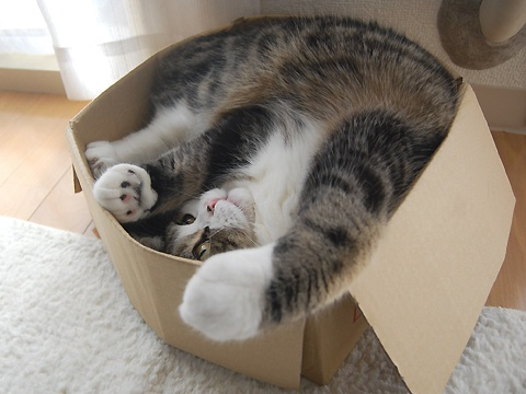 Gattilicious  =^.^= In-and-out-maru-cat-monday-kitty-box-jumping