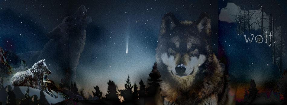 Wolfwelt