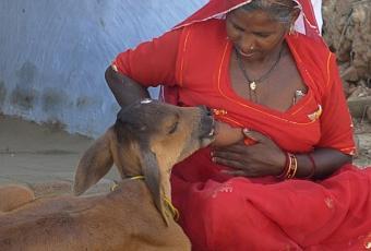 Le Meraviglie della Natura - Pagina 3 Donna-indiana-allatta-vitellino-al-proprio-se-T-1