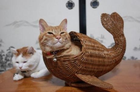 Joyeux anniversaire Elerina The-worlds-top-10-best-images-of-mermaid-cats-L-cCtP7p