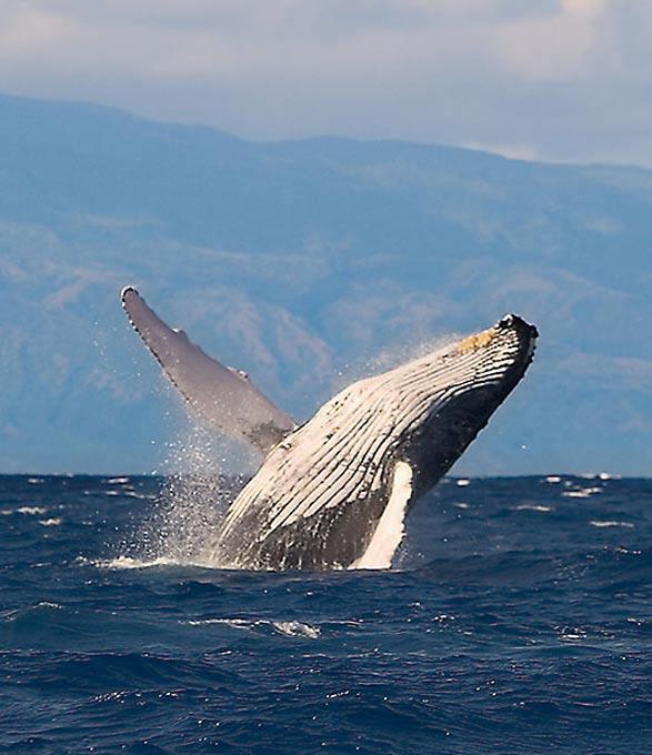 Le sommeil de la baleine BALEINE%202222