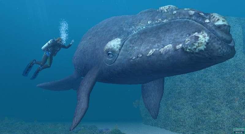 Le sommeil de la baleine Baleine%20qui%20dort%20777