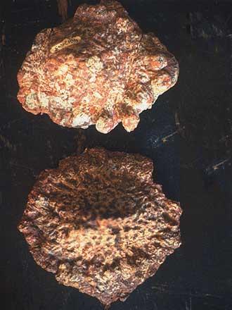 Pierres D'Ica Figurines D'Acambaro Sauropodes%20%C3%A0%20cuirasse%20osseuse