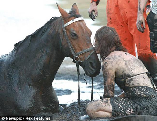 Sauvetage d'un cheval F1PsEIVh