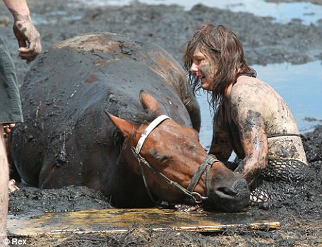 Sauvetage d'un cheval HO6MAzkh