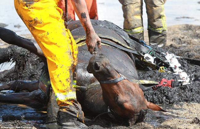 Sauvetage d'un cheval KRjsCOIh