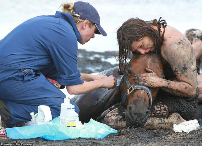 Sauvetage d'un cheval MnMRaoeh