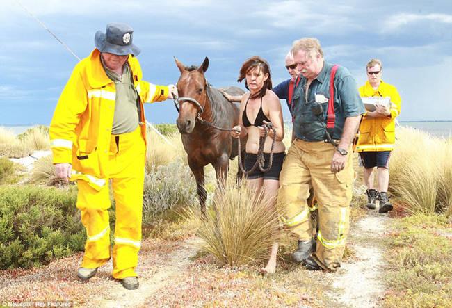 Sauvetage d'un cheval OF69gNVh