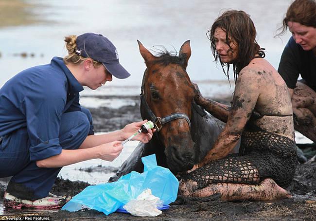 Sauvetage d'un cheval Xftl291h