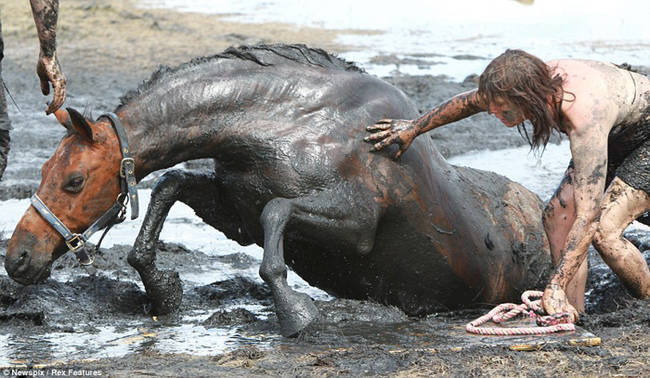 Sauvetage d'un cheval B1E1CQAh